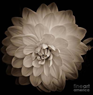 Photograph - Sepia Dahlia by Chalet Roome-Rigdon