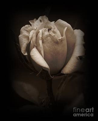 Photograph - Sepia Tea Rose by Chalet Roome-Rigdon
