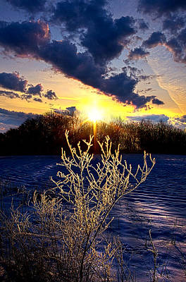 Red Leaves Snow Wall Art - Photograph - Serendipity by Phil Koch