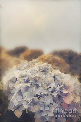 Photograph - Shabby Pastel Flowers In Vintage Australian Style by Jorgo Photography - Wall Art Gallery