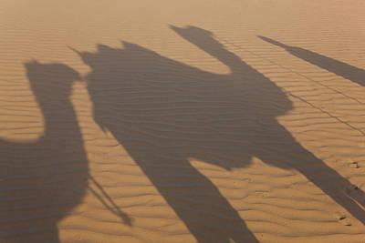 Camel Photograph - Shadows Of A Camel Train, Thar Desert by Peter Adams