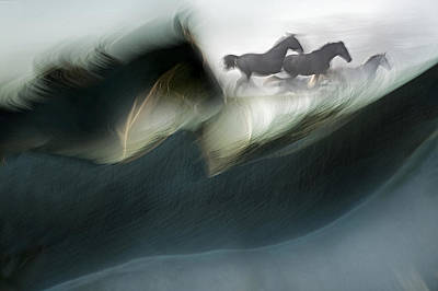 Running Horses Photograph - Shadows Of Power by Milan Malovrh