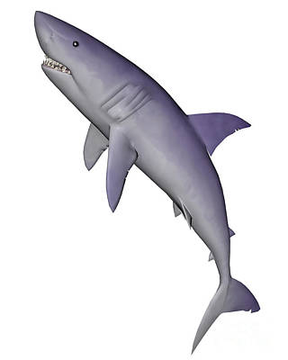 Shark Illustration, White Background Art Print