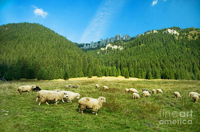 Highlands Photograph - Sheep Farm In The Mountains by Michal Bednarek