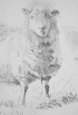 Drawing - Sheep Pencil Drawing by Mike Jory