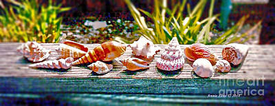 Photograph - Shell Collection by Annie Zeno