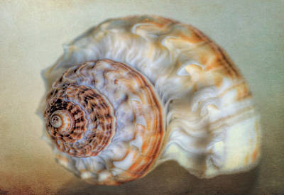 Photograph - Shell by David and Carol Kelly