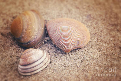 Shells  Art Print by LHJB Photography