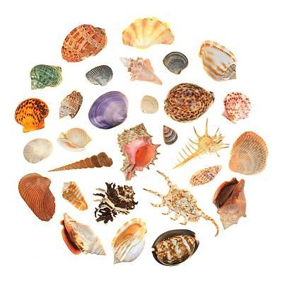 Shells Art Print by Jim Hughes