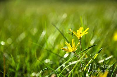 Photograph - Shiny Yellow Flower by Kennerth and Birgitta Kullman