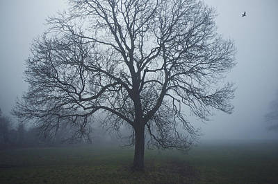 Photograph - Shrouded In Fog by Christopher Rees