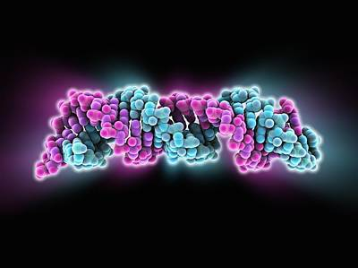 Signal Recognition Particle Rna Molecule Art Print by Science Photo Library