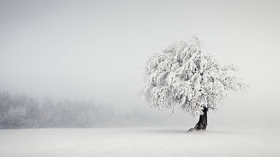 Lonely Tree Wall Art - Photograph - Silence by Andreas Wonisch