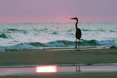Photograph - Silhouette Of Blue Heron At The Beach At Sunset by Alex Grichenko