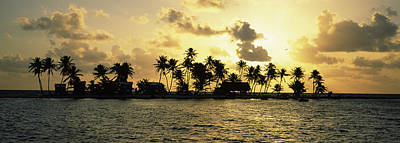 Silhouette Of Palm Trees On An Island Art Print by Panoramic Images