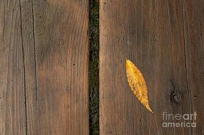 Photograph - Singular by Rebecca Cozart