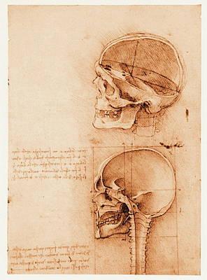 Skull Anatomy Art Print by Mehau Kulyk