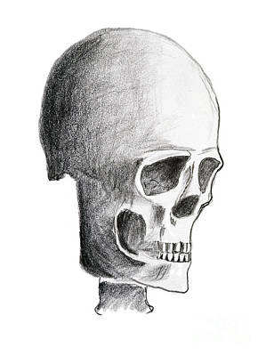 Human Skull Drawing - Skull by Michal Boubin