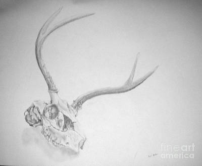 Drawing - Skull by Tamir Barkan