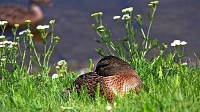Photograph - Sleeping Beauty by Davandra Cribbie