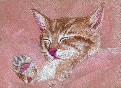 Drawing - Sleeping Kitty by Jo Prevost