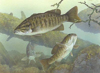 Fish Underwater Drawing - Smallmouth Bass by Mountain Dreams