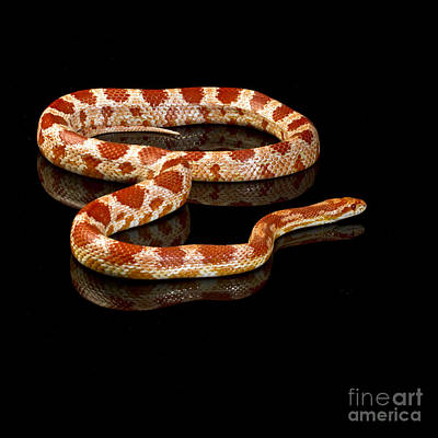 Art Print featuring the photograph Snake by Gunnar Orn Arnason