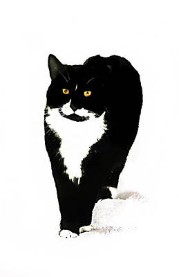 Photograph - Snow Cat Two  by Expressionistart studio Priscilla Batzell
