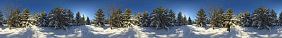 Quebec Photograph - Snow Covered Pine Trees, Quebec, Canada by Panoramic Images