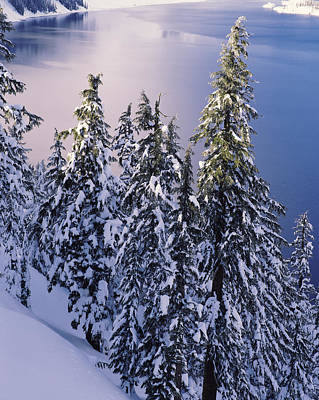 Crater Lake View Photograph - Snow Covered Trees At South Rim, Crater by Panoramic Images