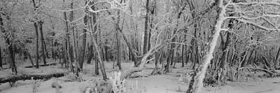 Snow Covered Trees In A Forest Art Print by Panoramic Images