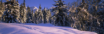 Chugach Mountains Photograph - Snow Covered Trees On A Hill, Chugach by Panoramic Images