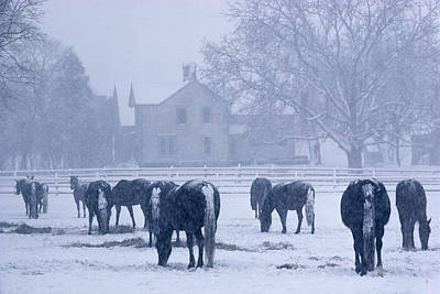 Snowfall Corral Art Print by Bruce Thompson