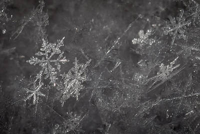 Photograph - Snowflakes by Ernie Echols