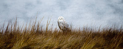 Photograph - Snowy Owl by Crystal Wightman