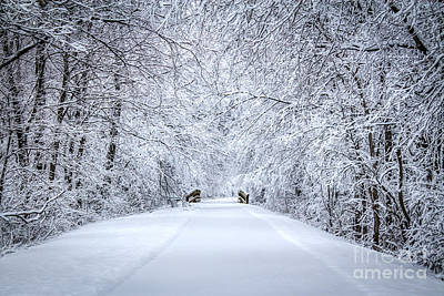 Snowy Path - Paintography Art Print by Dawn M Smith