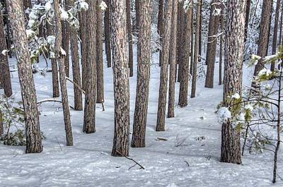 Storms Photograph - Snowy Woods by Donna Doherty