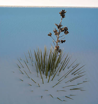 Arid Life Photograph - Soaptree Yucca Yucca Elata At Sand by Panoramic Images