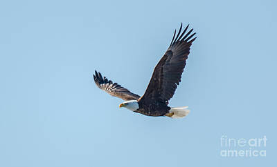 Photograph - Soaring High by Cheryl Baxter