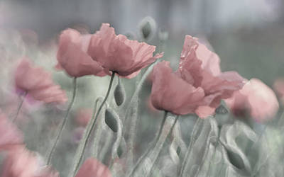Pastel Colors Photograph - Softly by Anne Worner