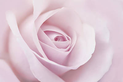 Photograph - Softness Of A Pink Rose Flower by Jennie Marie Schell