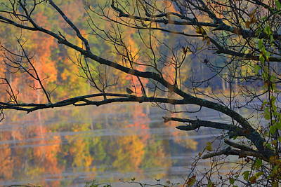 Twin Lakes Photograph - Songster On The Lake by Deborah Bifulco