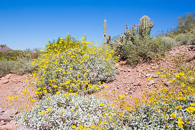 Photograph - Sonoran Desert Plants by Jodi Jacobson