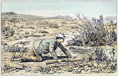 Antelope Drawing - South Africa Hunter, 1891 by Granger