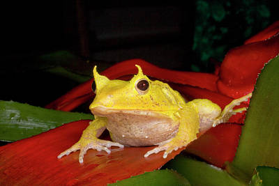 Frog Photograph - South Pacific, Solomon Islands by Jaynes Gallery