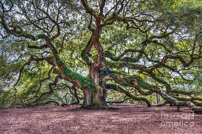 Photograph - Southern Angel Oak Tree by Dale Powell