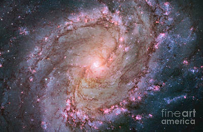 Photograph - Southern Pinwheel Galaxy M83 by Science Source