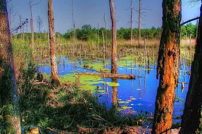 Southern Swamp Art Print by Ed Roberts