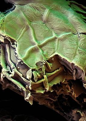 Spanish Moss Leaf Art Print