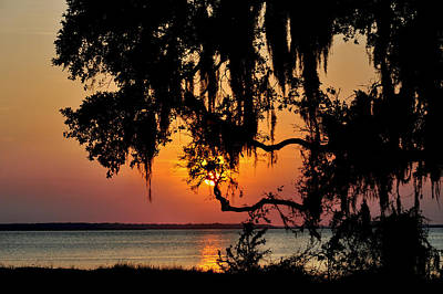 Photograph - Spanish Moss Sunset by Peter DeFina